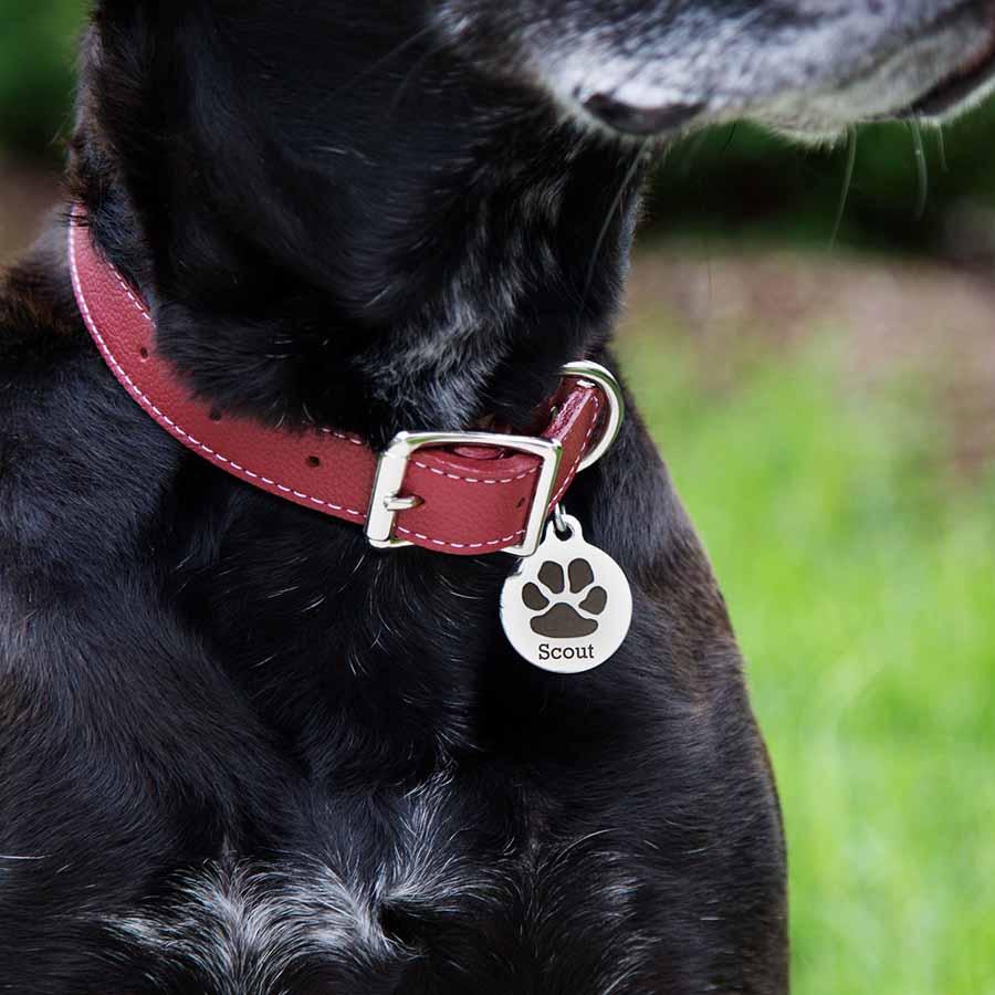 Paw Print Design Dog ID Tag on Dog