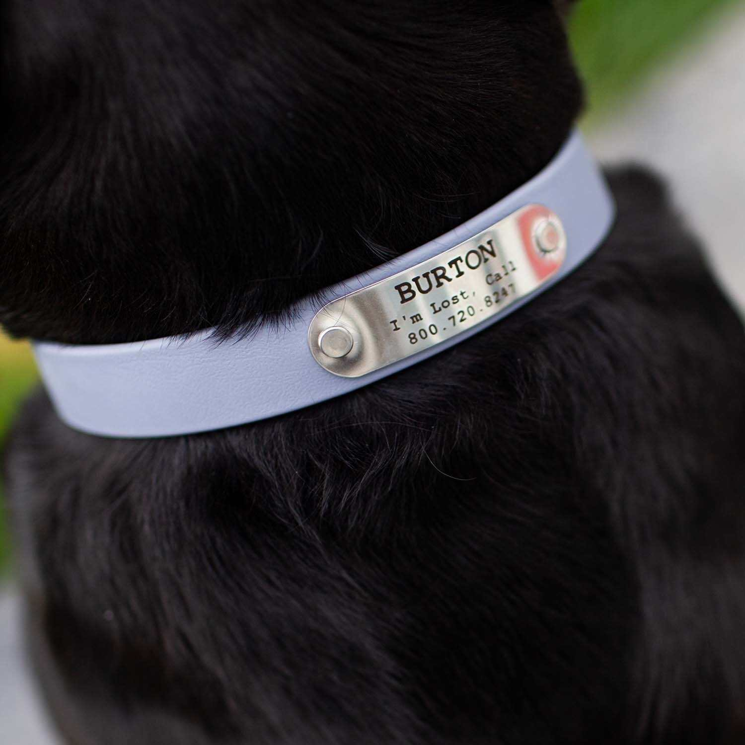 Waterproof Soft Grip Dog Collar with Personalized Nameplate Grey on Dog