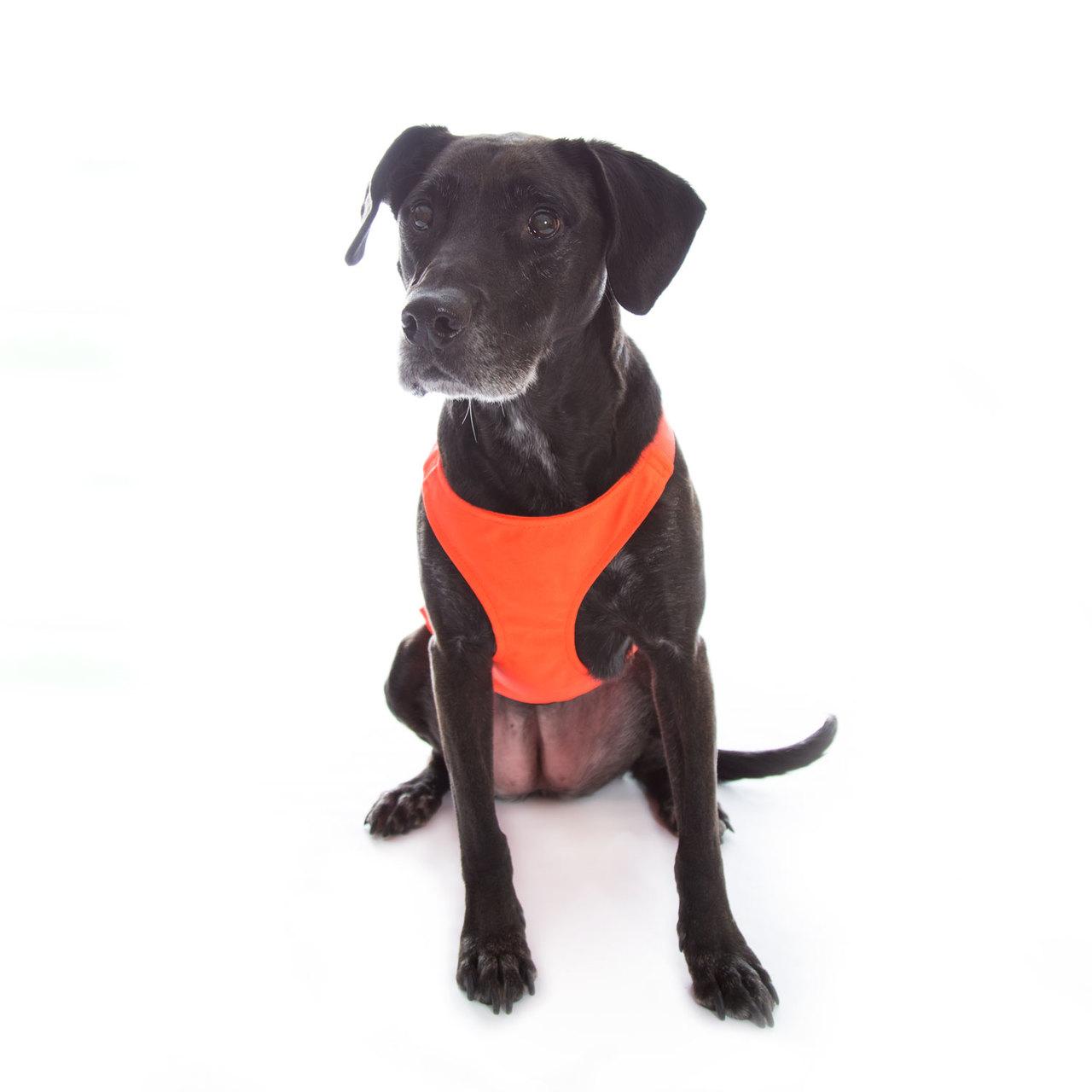 Mendota Skid Plate for Dogs