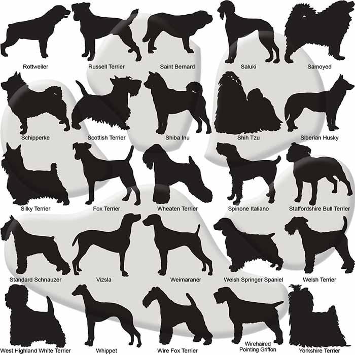 Custom Dog Breed ID Tags - Options 76 - 100
