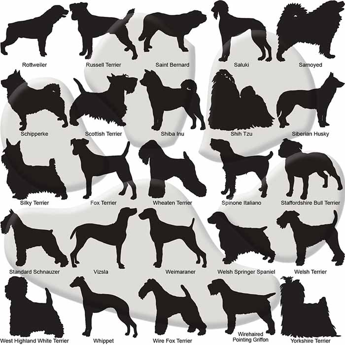 Custom Dog Breed ID Tags - Options 76 - 100