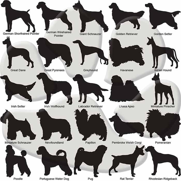 Custom Dog Breed ID Tags - Options 51 - 75