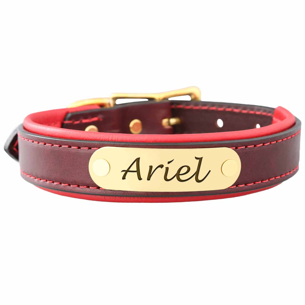 Padded Leather Collar with Nameplate Red Brass