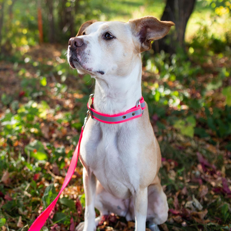 Waterproof Reflective Safety Dog Collar On Dog Pink