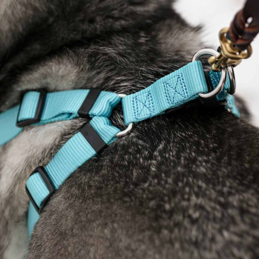 Personalized Buckle Step-In Dog Harness