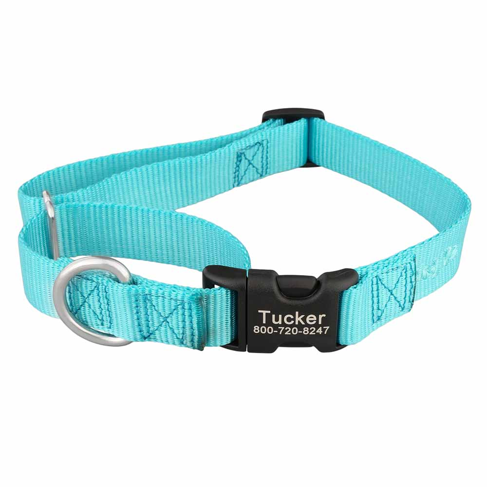 Martingale Dog Collar with Personalized Buckle Turquoise