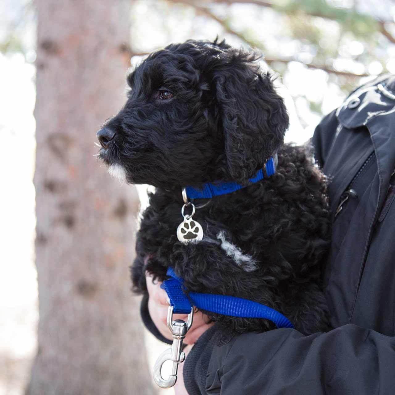 Nylon Starter Kit - on Dog