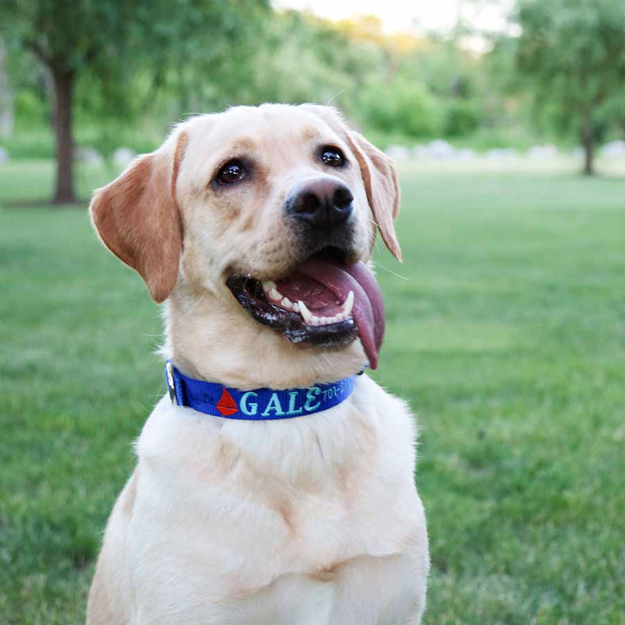 Embroidered Nautical Dog Collar on Dog