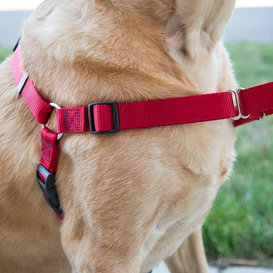 No Pull Embroidered Dog Harness On Dog 2