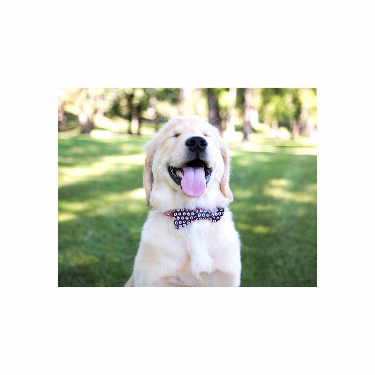 Silly Dog Blank Note Cards