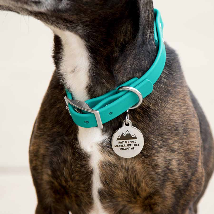 Not All Who Wander Are Lost Dog Tag - On Dog
