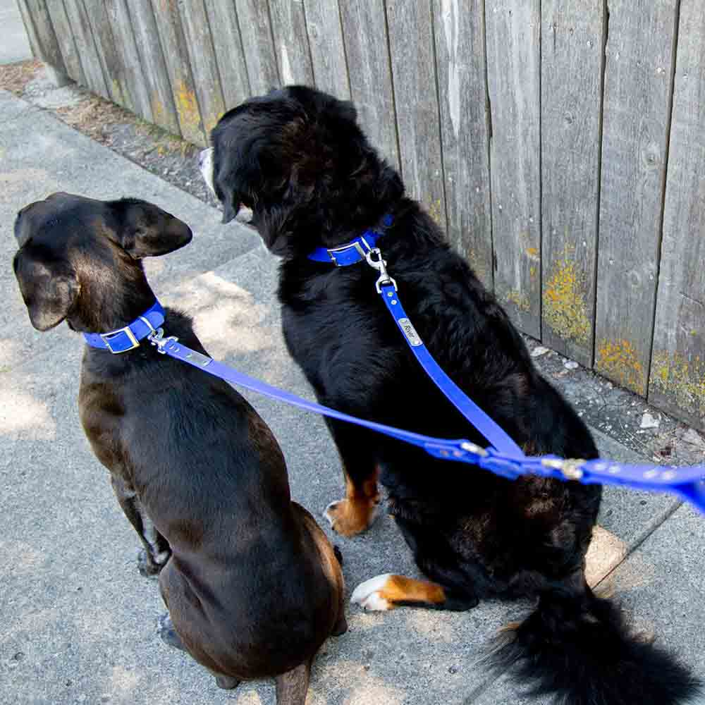 Waterproof Tangle-Free Double Dog Leash