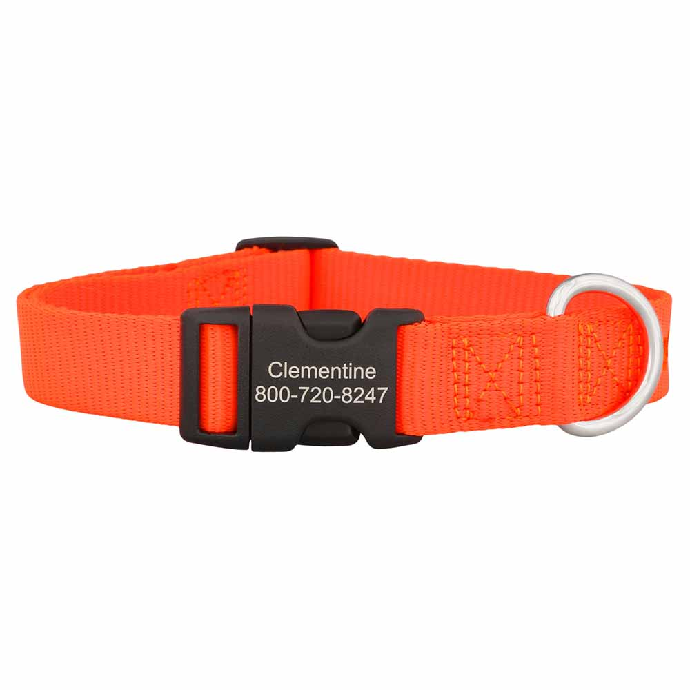 Personalized Buckle Nylon Dog Collar Orange