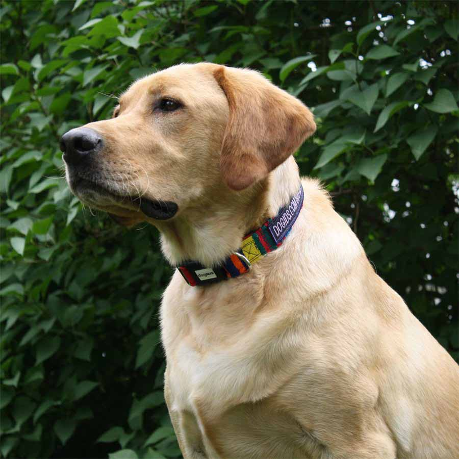Embroidered Maya Personalized Dog Collar on Dog