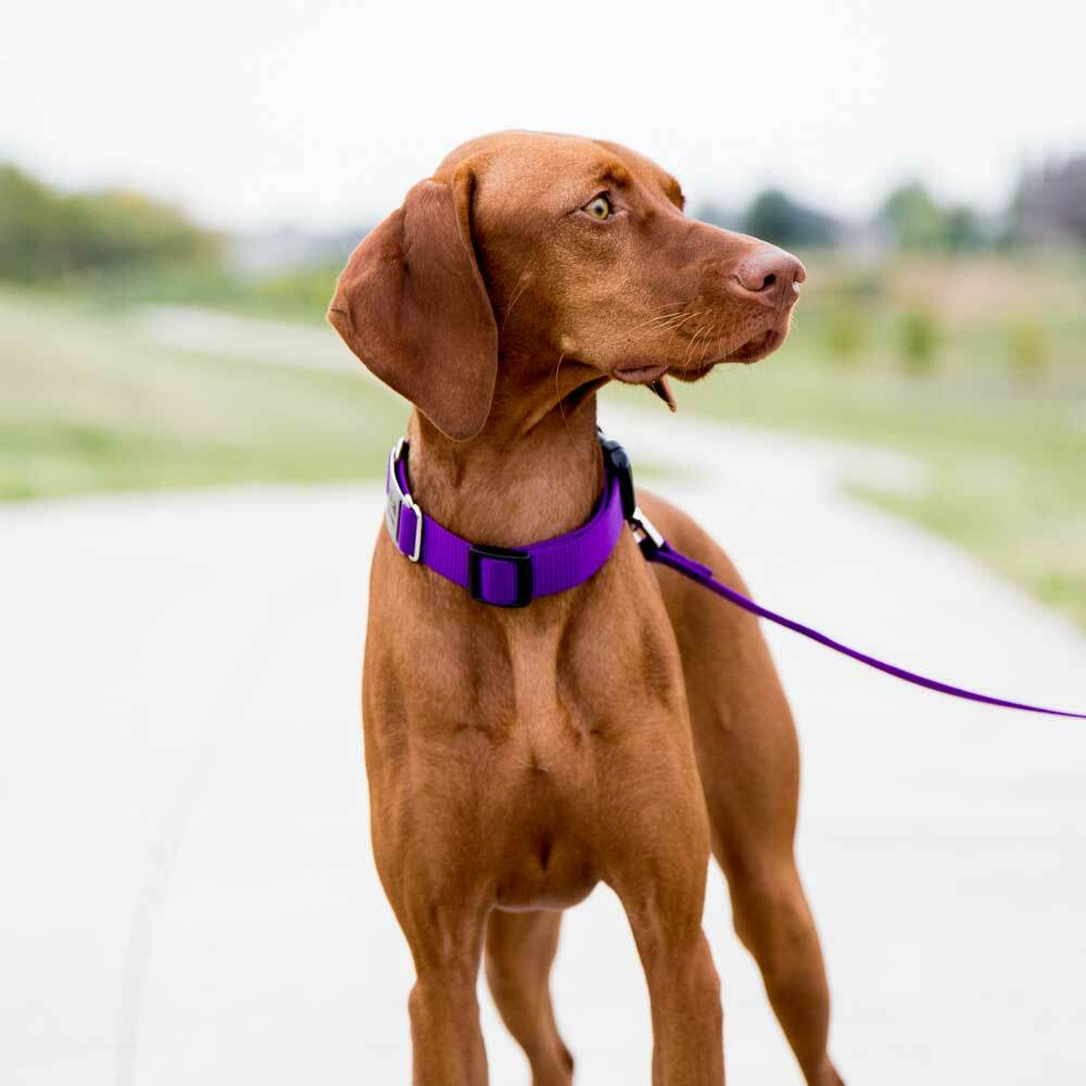 Nylon ScruffTag Personalized Dog Collar on Piper Front