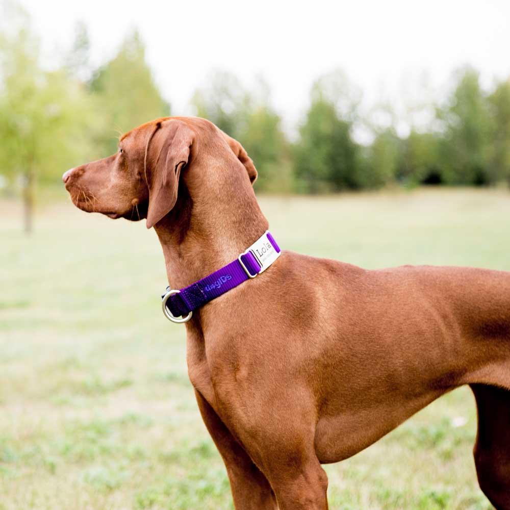 Nylon ScruffTag Personalized Dog Collar on Piper Side