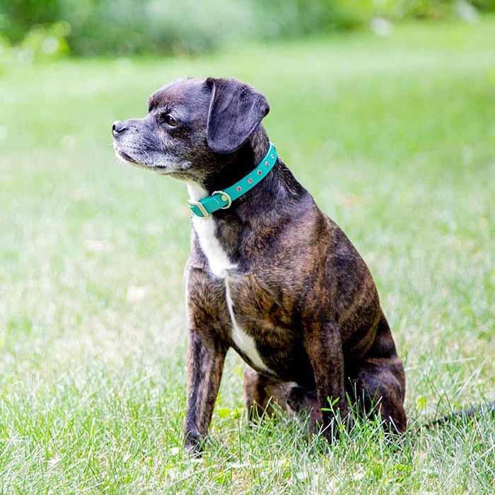 Jewel Series Rhinestone Small Dog Collar with Nameplate on Dog