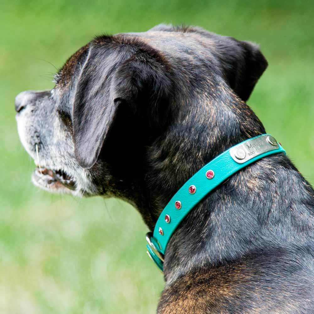 Jewel Series Rhinestone Small Dog Collar with Nameplate on Dog 2