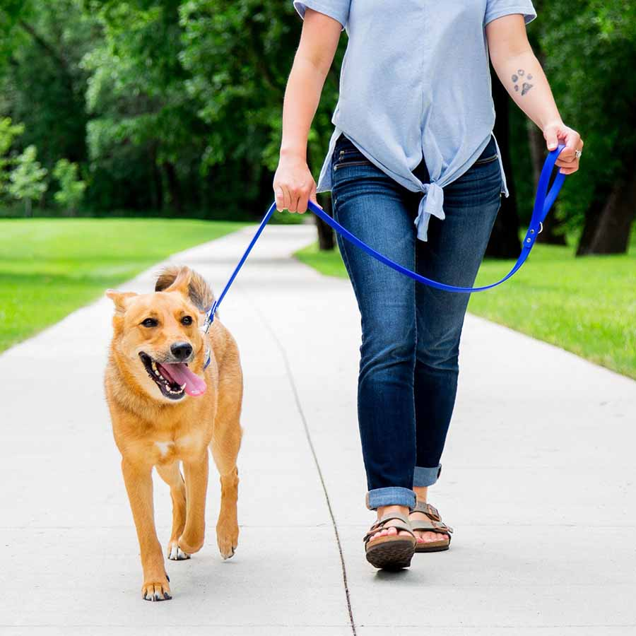 Waterproof Soft Grip Leash on dog