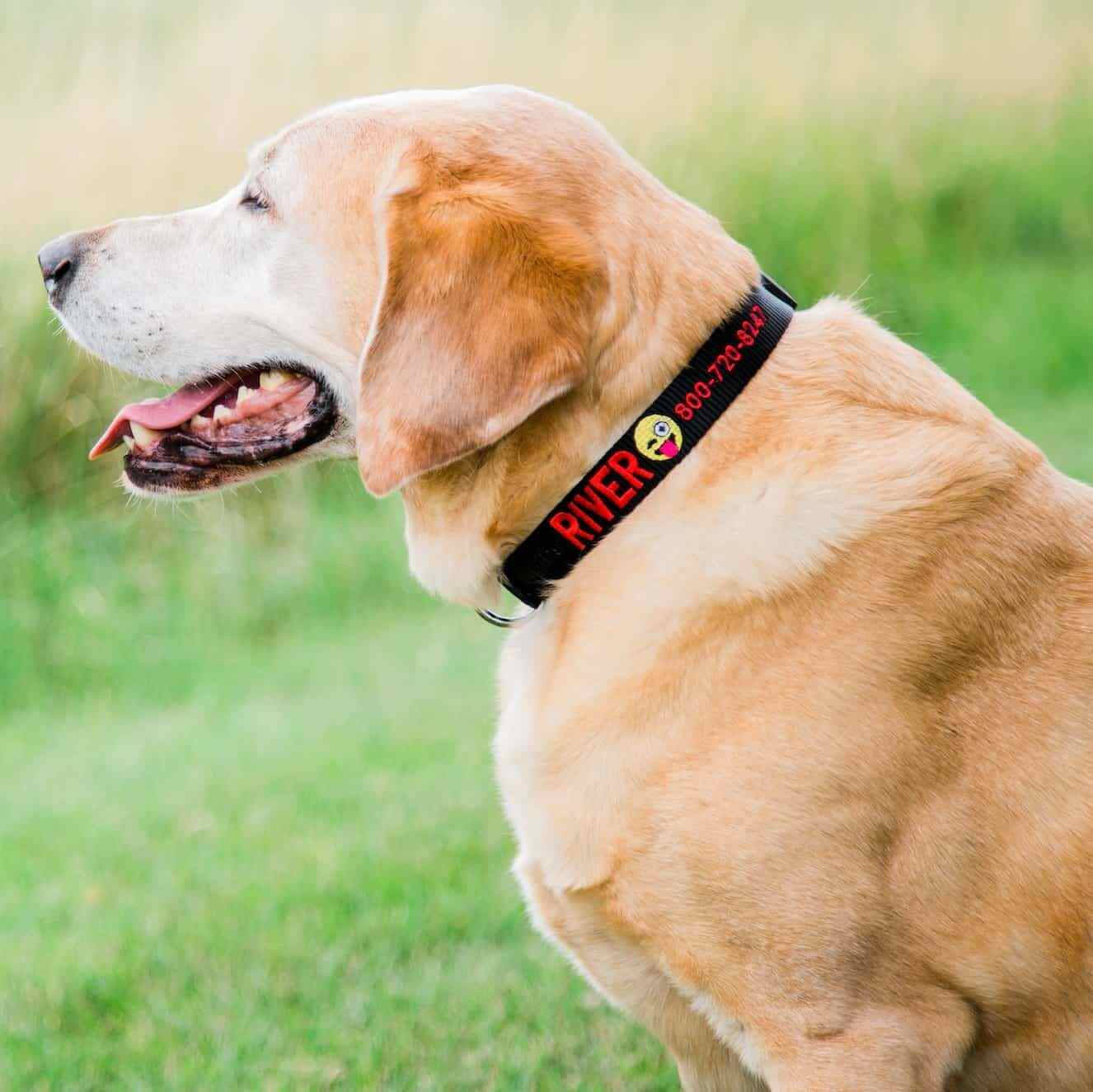 Custom Embroidered Emoji Dog Collar on Yellow Lab