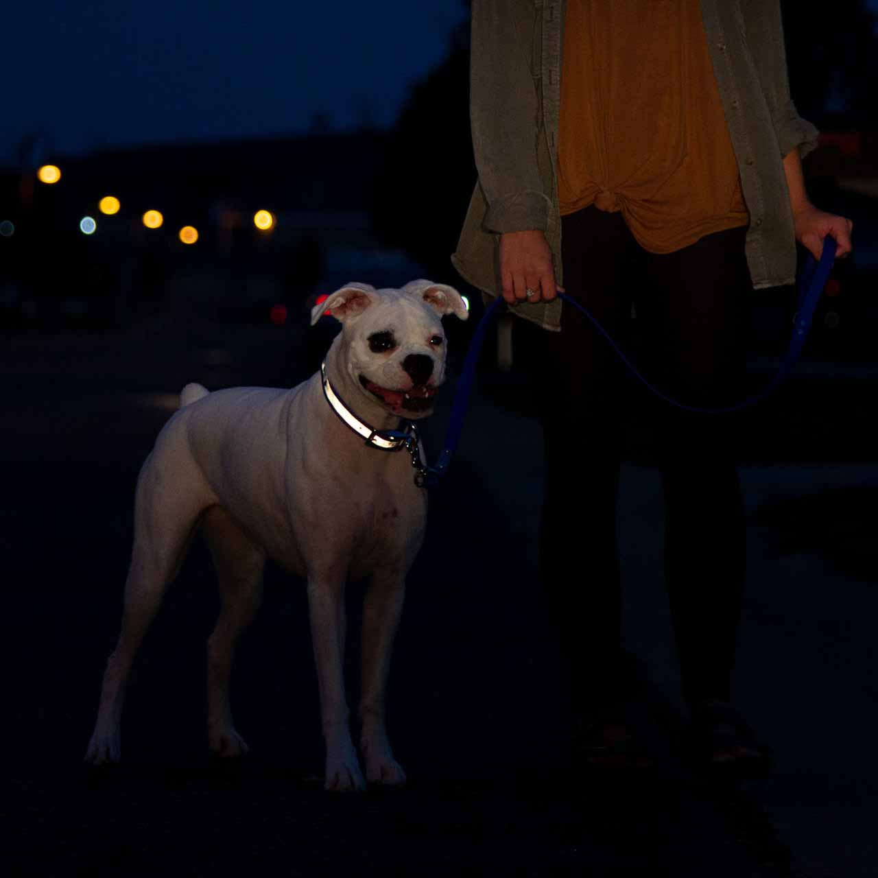 Waterproof Reflective Safety Dog Collar Night Use