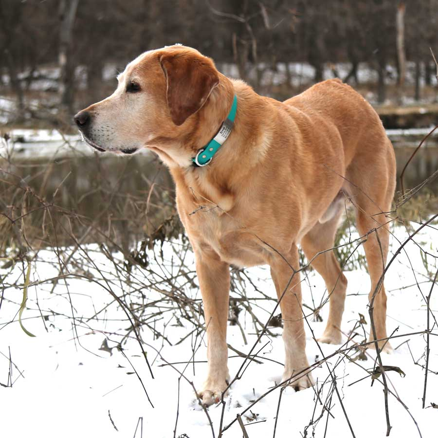 Quick Release Waterproof SleeveTag Collar Teal on River