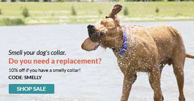 Use code SMELLY for 10% off all dog collars
