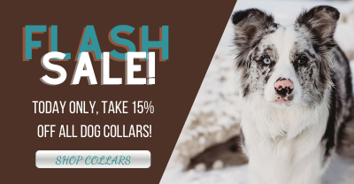 Today only, 15% off all dog collars!