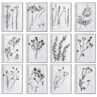 Uttermost Contemporary Botanicals Framed Prints, S/12 (85|33713)