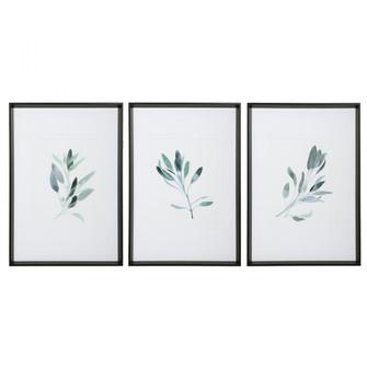 Uttermost Simple Sage Watercolor Prints, S/3 (85|33723)