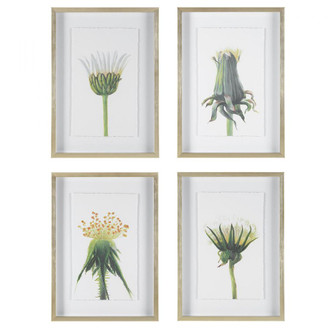 Uttermost Wildflowers Gold Framed Prints, S/4 (85|41431)