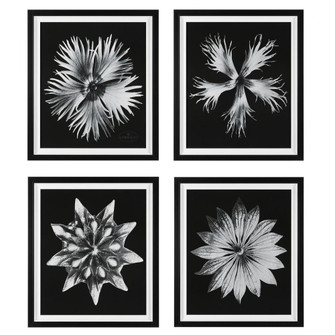 Uttermost Contemporary Floret Framed Prints, S/4 (85|41427)