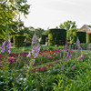 Foxglove Flower Seeds - heirloom seeds for your garden from the Colonial Williamsburg seed collection | The Shops at Colonial Williamsburg