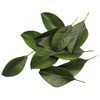 Faux Magnolia Leaves Box of 24