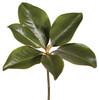 Magnolia Leaf Pick