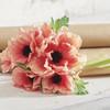 """Coral Anemone Bundle, 11.5"""""""