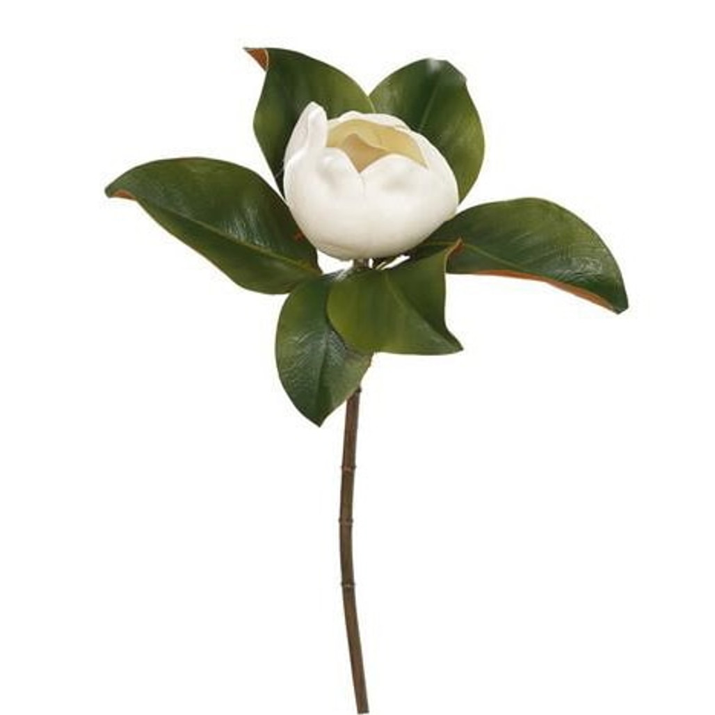 """Magnolia Closed Blossom Stem - 20"""" 