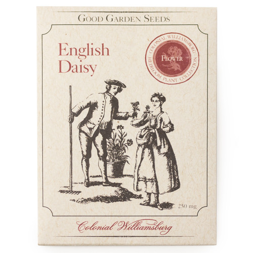 English Daisy Flower Seeds
