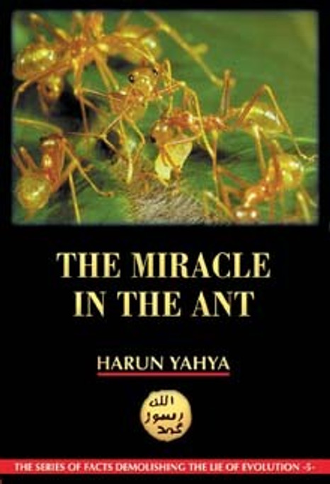 The Miracle in the Ant