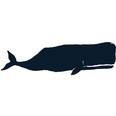 Whale watch in Maine