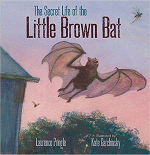 Secret Life of the Little Brown Bat