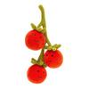 JC Vivacious Vegetable Tomato