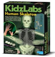 TS KidzLabs Glow Human Skeleton