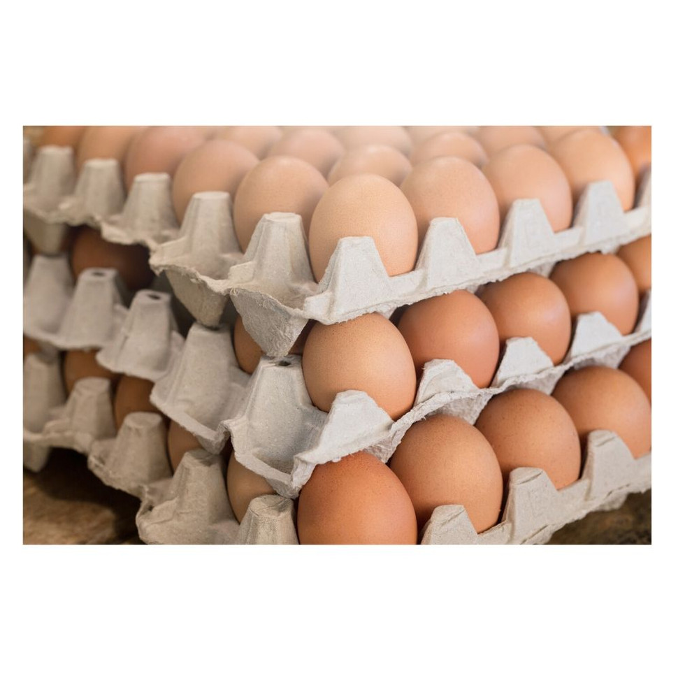 EGGS LARGE (15 DOZ)