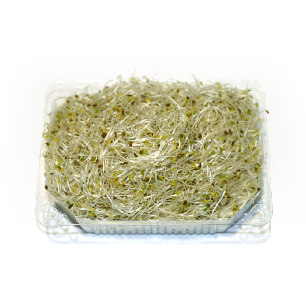 ALFALFA SPROUTS PUNNET