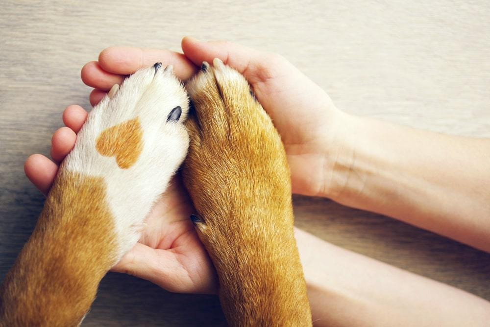 CBD for Pets: How it Can Help Your Senior Dog Live a Pain-Free Life