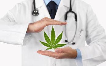 Is Hemp-Derived Better Than Marijuana-Derived CBD?