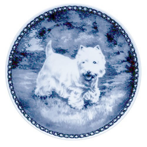 West Highland White Terrier dbp07082