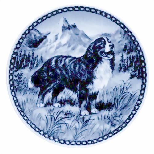 Bernese Mountain Dog dbp07175