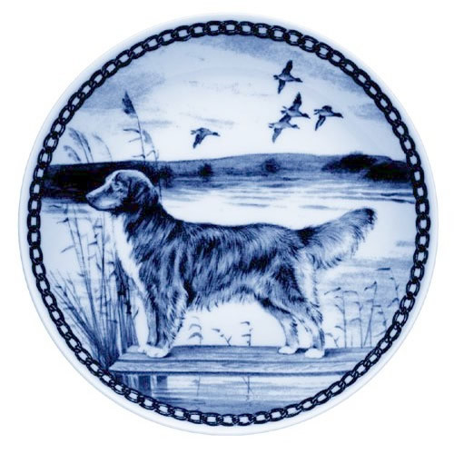 Nova Scotia Duck Tolling Retriever dbp07204